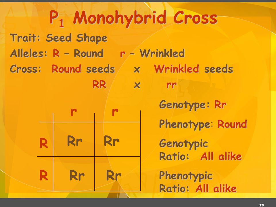 P1 Monohybrid Cross r r Rr Rr R R Rr Rr Trait: Seed Shape