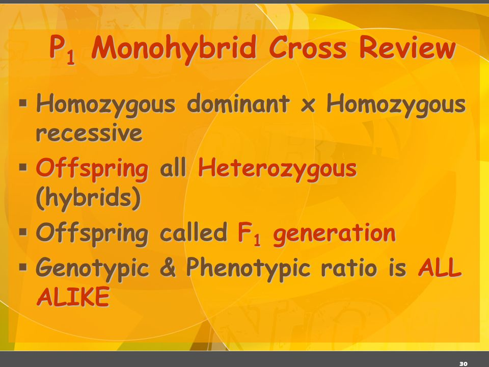 P1 Monohybrid Cross Review