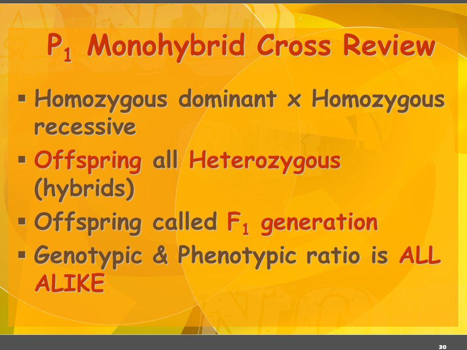 P1 Monohybrid Cross Review