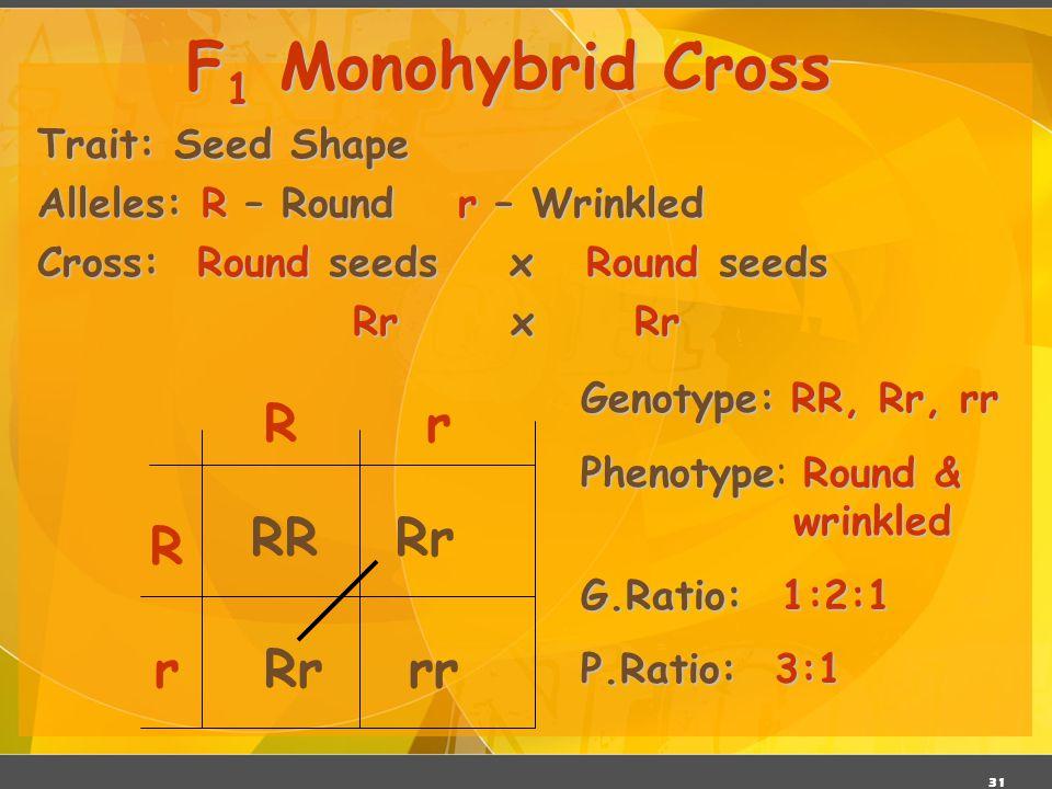 F1 Monohybrid Cross R r RR Rr R r Rr rr Trait: Seed Shape