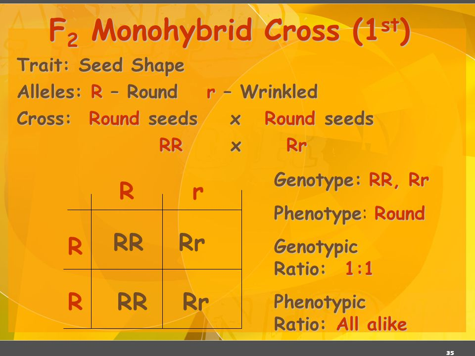 F2 Monohybrid Cross (1st)