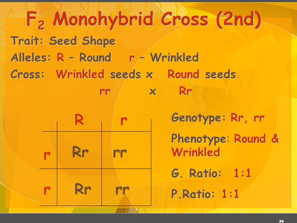 F2 Monohybrid Cross (2nd)