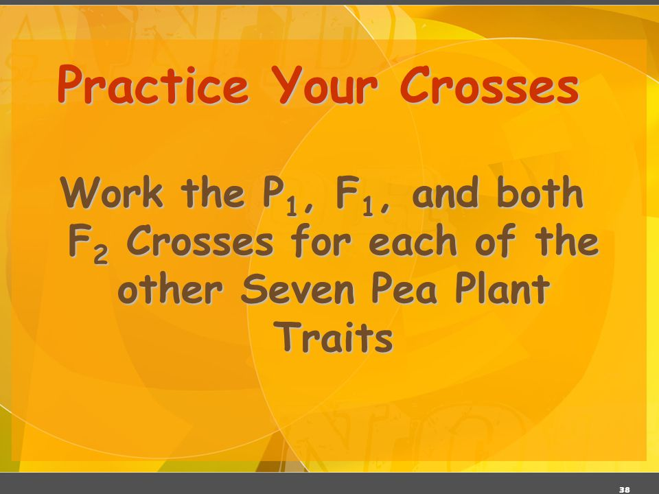Practice Your Crosses Work the P1, F1, and both F2 Crosses for each of the other Seven Pea Plant Traits.