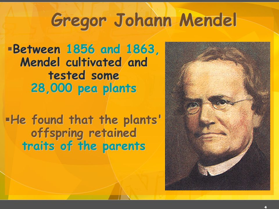 He found that the plants offspring retained traits of the parents