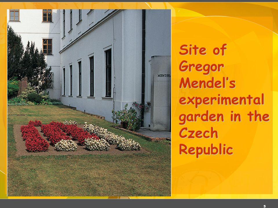 Site of Gregor Mendel's experimental garden in the Czech Republic
