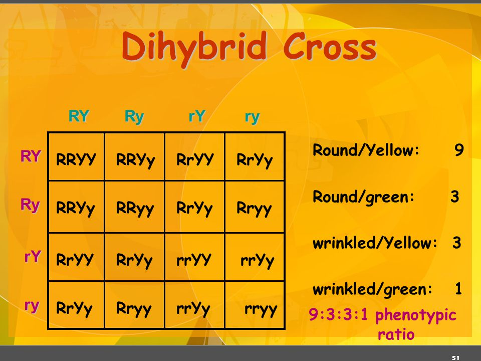 Dihybrid Cross RY Ry rY ry Round/Yellow: 9 Round/green: 3