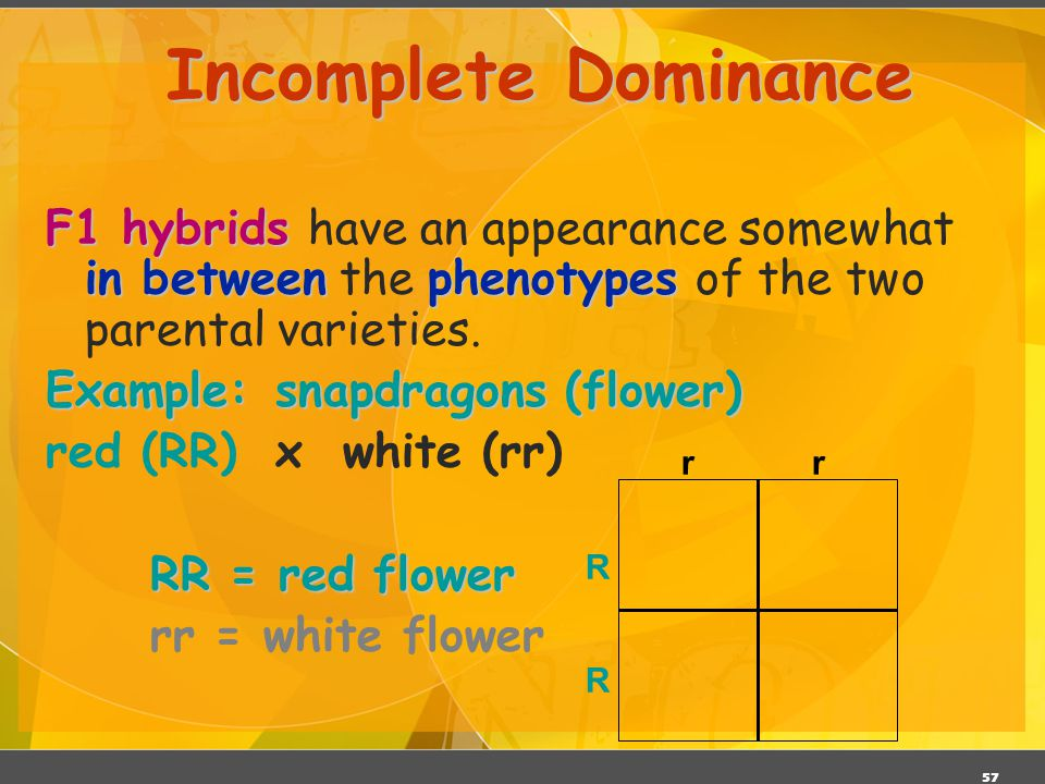 Incomplete Dominance F1 hybrids have an appearance somewhat in between the phenotypes of the two parental varieties.