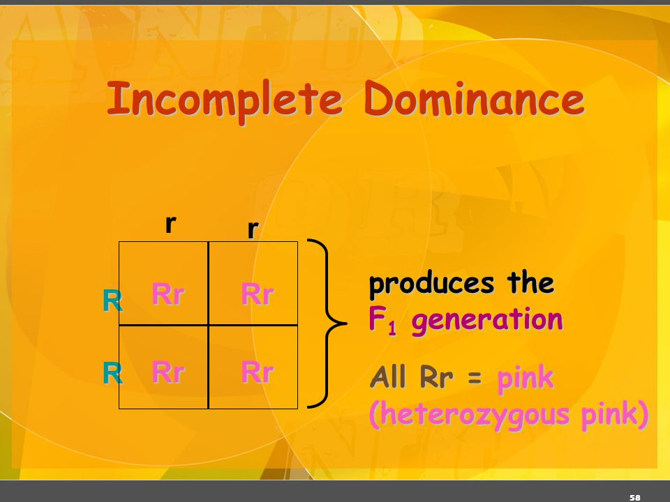 Incomplete Dominance r R r All Rr = pink (heterozygous pink)