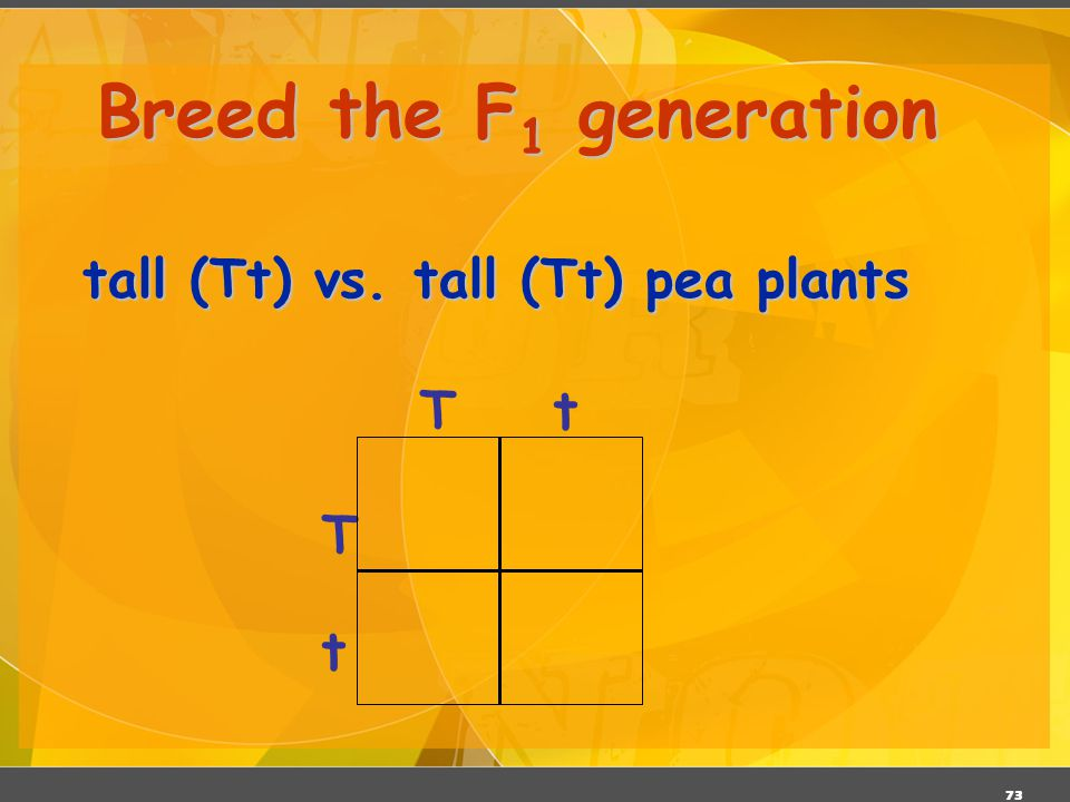 Breed the F1 generation tall (Tt) vs. tall (Tt) pea plants T t T t