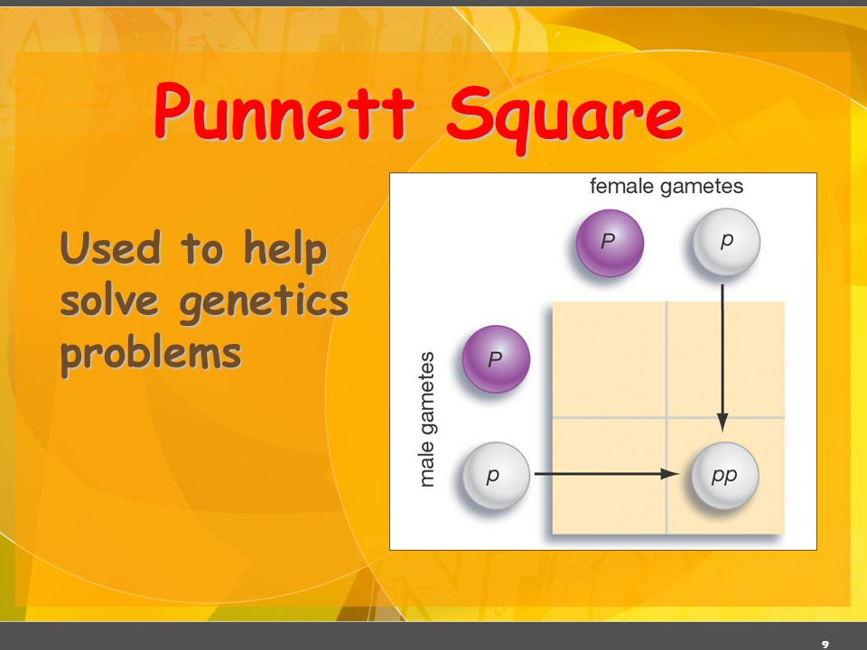 Punnett Square Used to help solve genetics problems