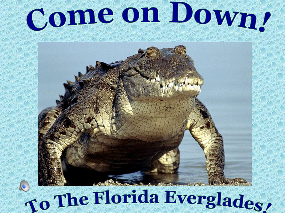 To The Florida Everglades!