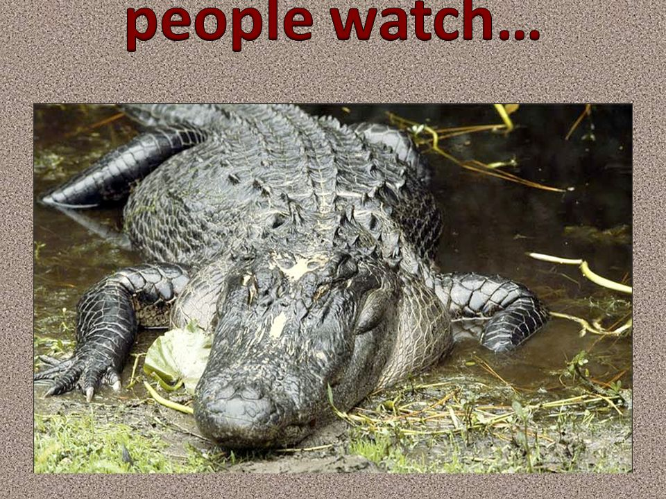 people watch…