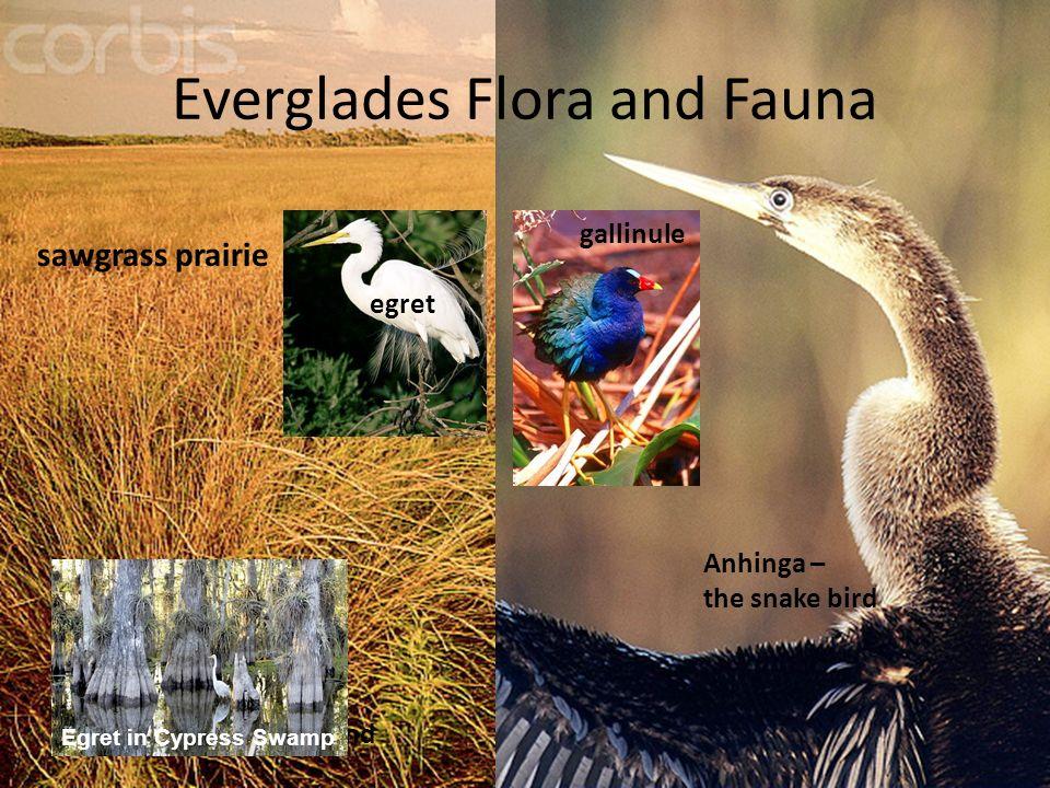Everglades Flora and Fauna