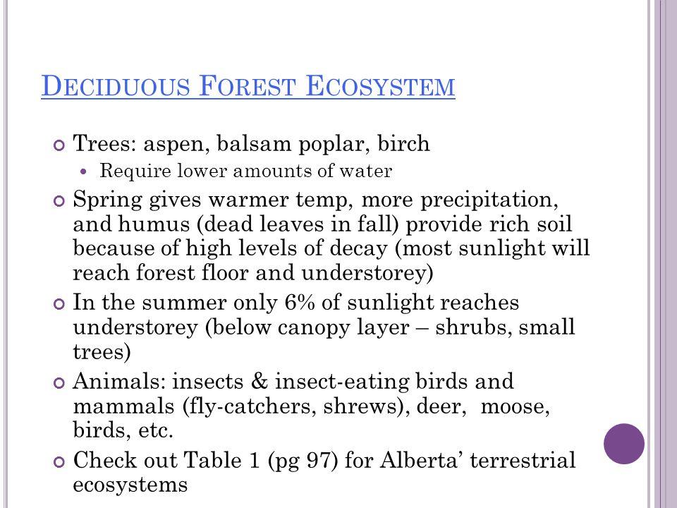 Deciduous Forest Ecosystem