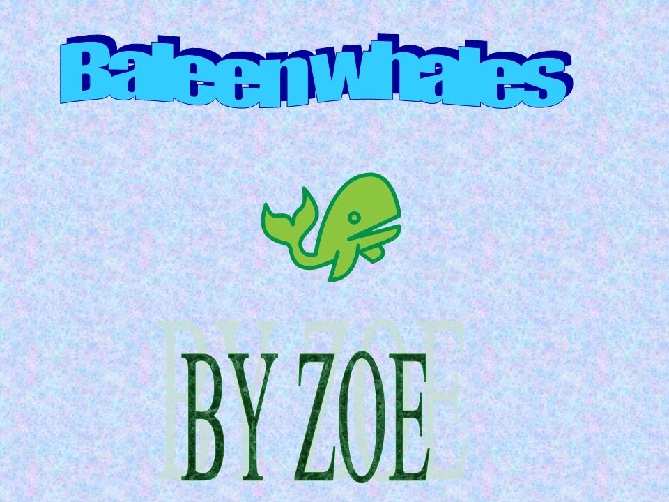 Baleen whales BY ZOE