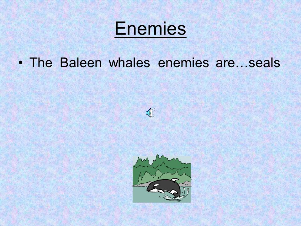 Enemies The Baleen whales enemies are…seals