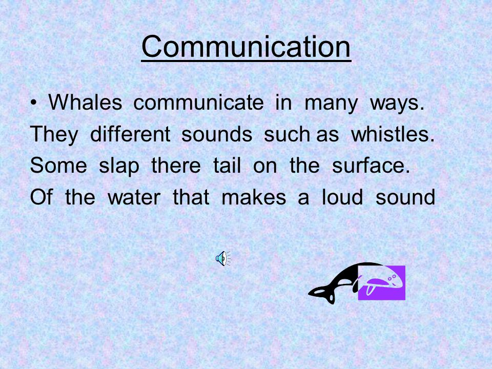 Communication Whales communicate in many ways.