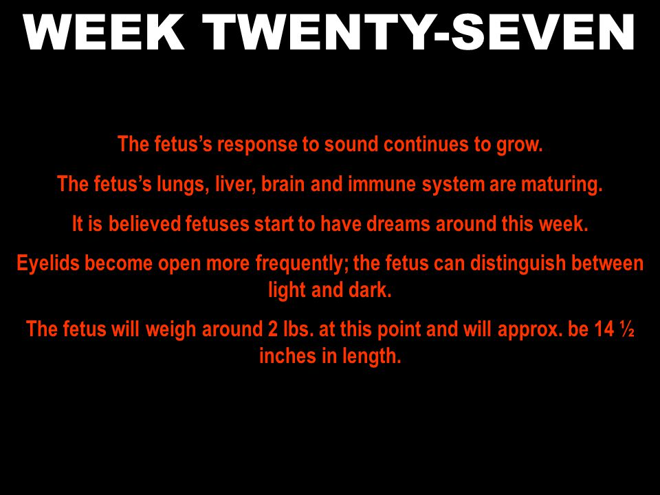 WEEK TWENTY-SEVEN The fetus's response to sound continues to grow.