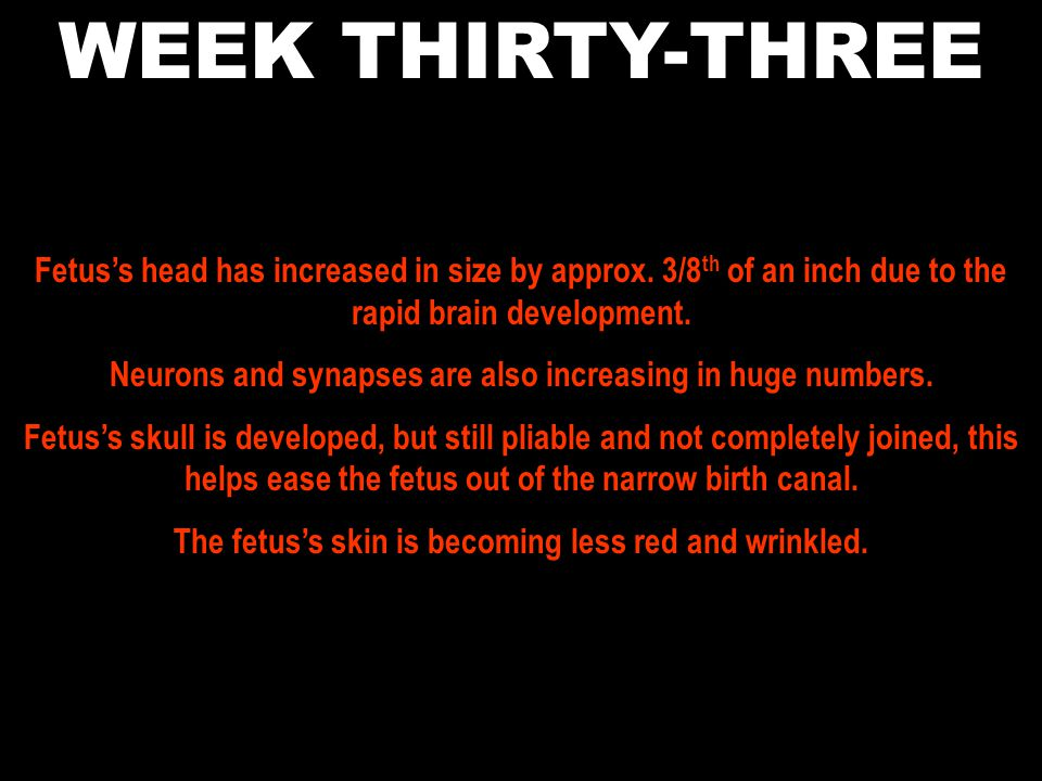 WEEK THIRTY-THREE Fetus's head has increased in size by approx. 3/8th of an inch due to the rapid brain development.