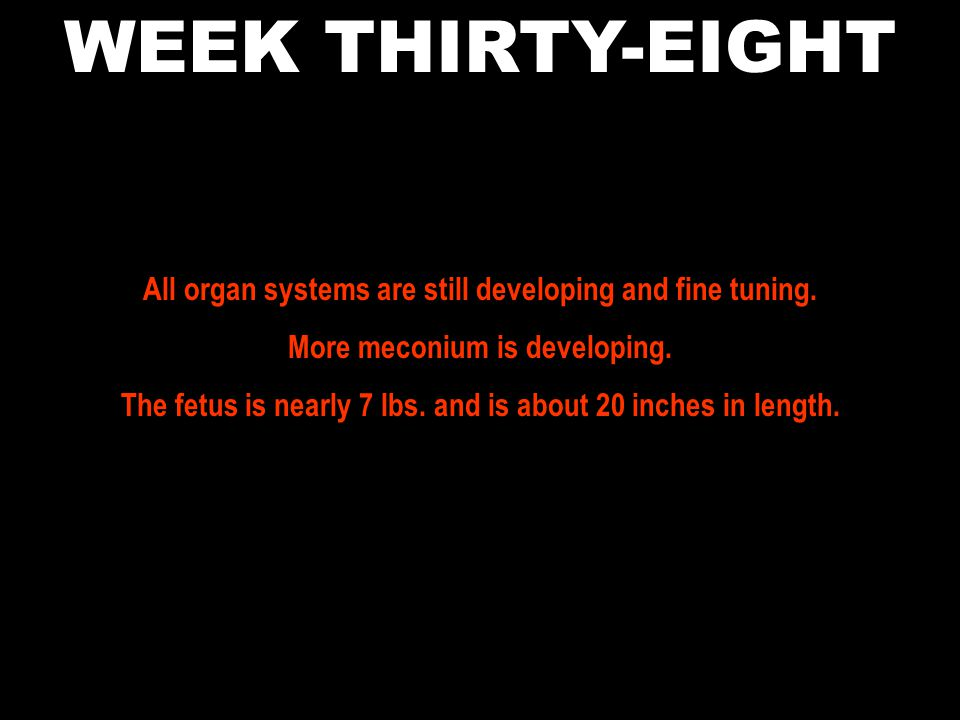 WEEK THIRTY-EIGHT All organ systems are still developing and fine tuning. More meconium is developing.