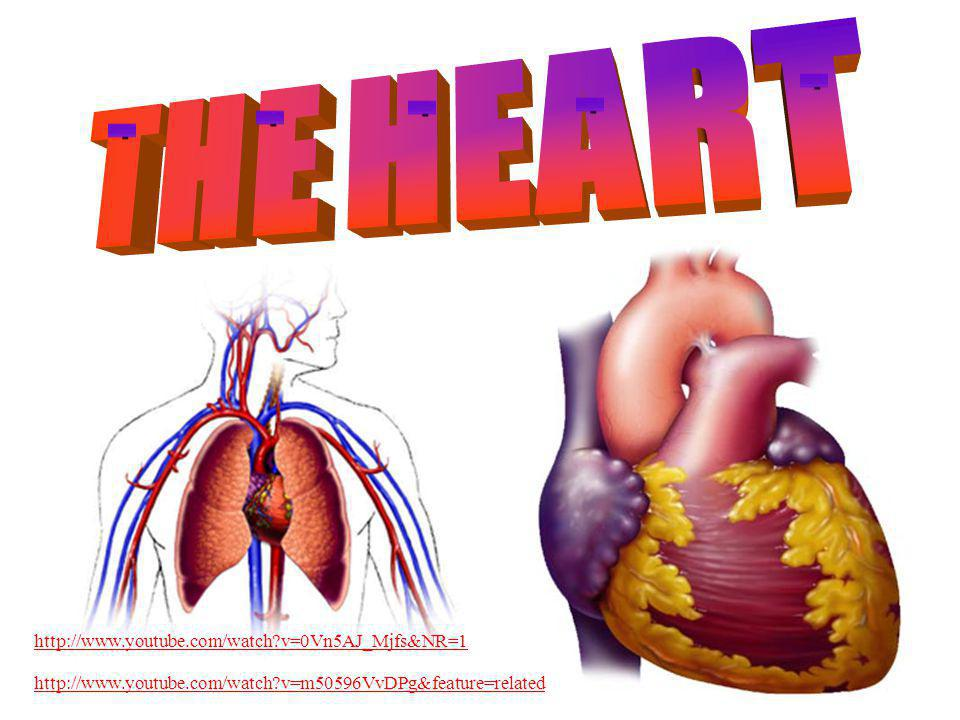THE HEART http://www.youtube.com/watch v=0Vn5AJ_Mjfs&NR=1