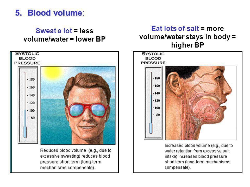 Blood volume: Eat lots of salt = more volume/water stays in body = higher BP. Sweat a lot = less volume/water = lower BP.