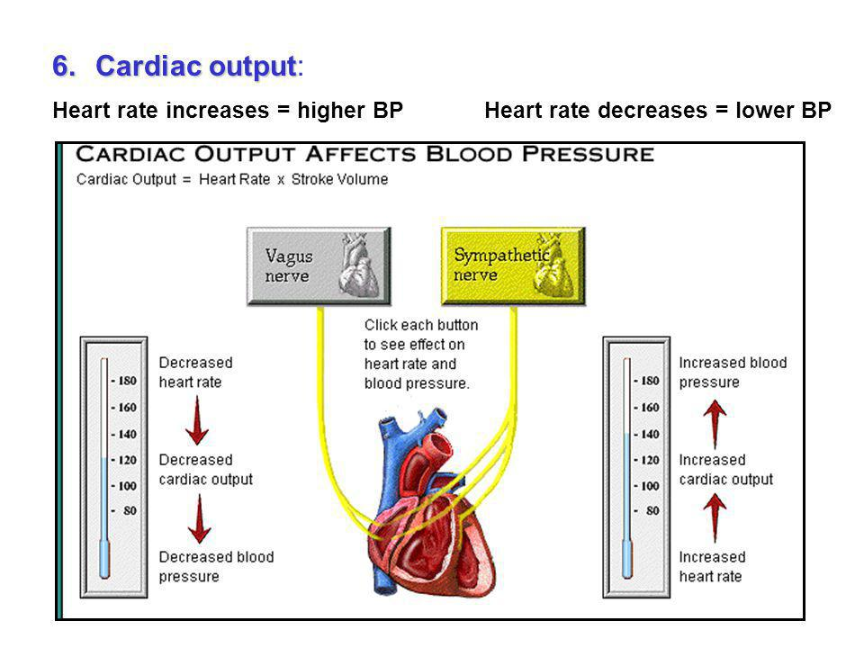 Cardiac output: Heart rate increases = higher BP Heart rate decreases = lower BP.
