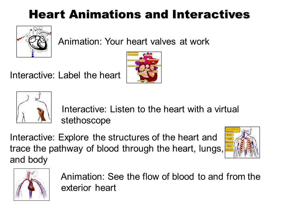 Heart Animations and Interactives