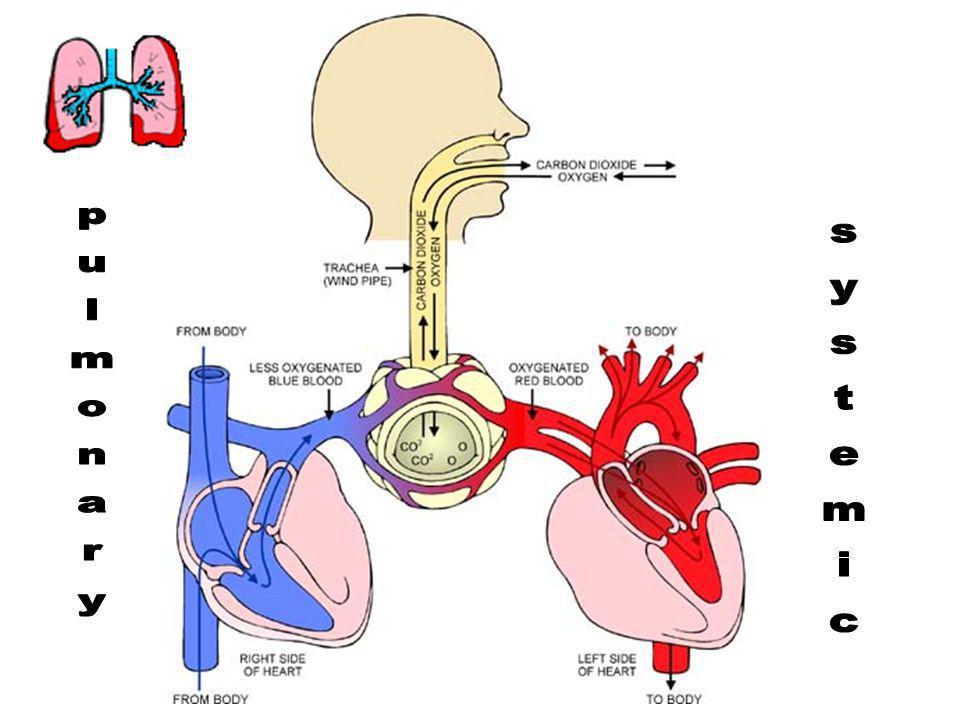 pulmonary systemic