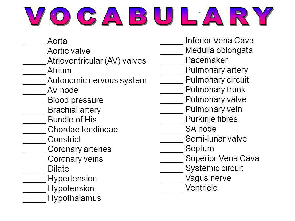 VOCABULARY _____ Aorta _____ Inferior Vena Cava _____ Aortic valve