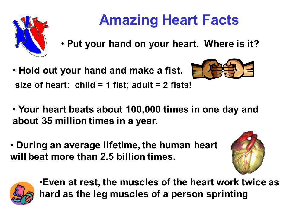 Amazing Heart Facts Put your hand on your heart. Where is it