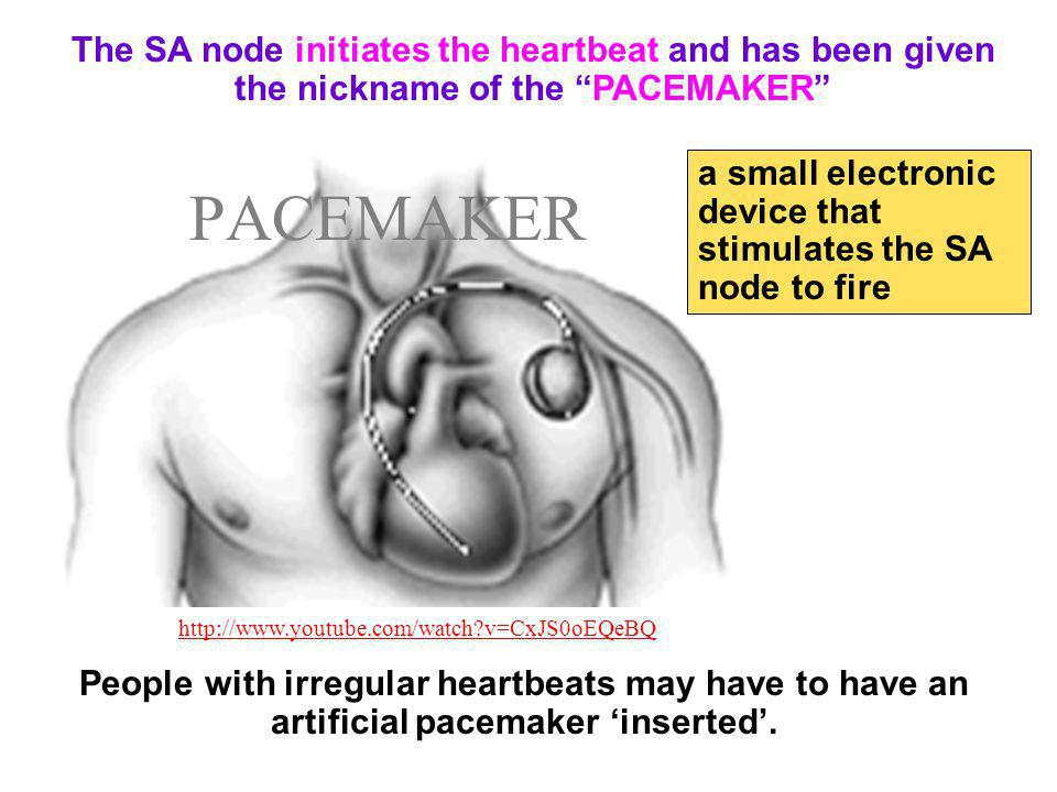 The SA node initiates the heartbeat and has been given the nickname of the PACEMAKER