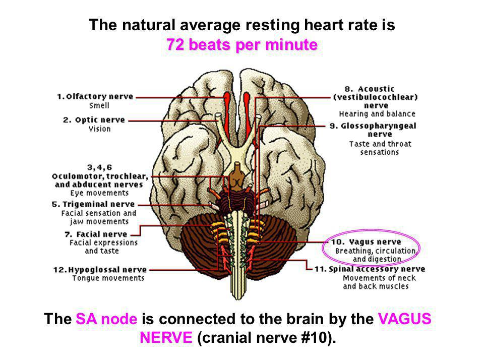 The natural average resting heart rate is 72 beats per minute