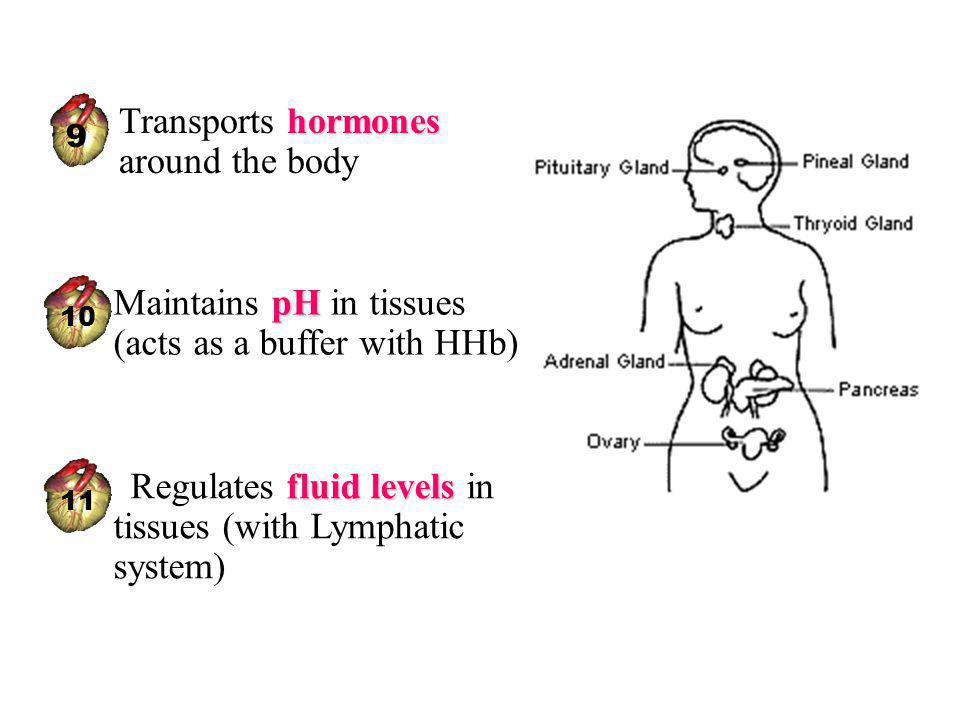 Transports hormones around the body