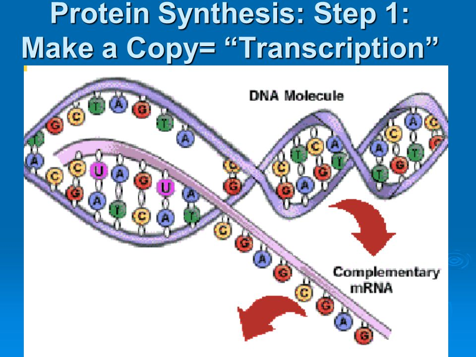 Protein Synthesis: Step 1: Make a Copy= Transcription