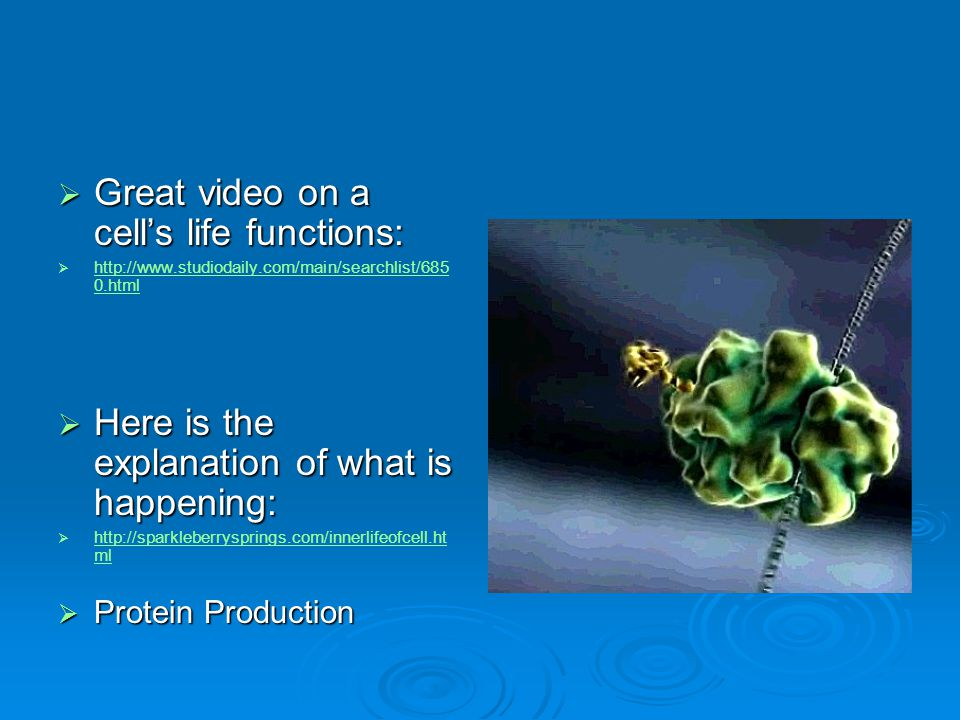 Great video on a cell's life functions:
