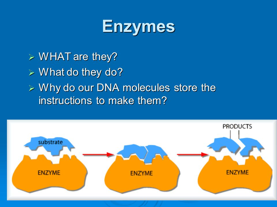 Enzymes WHAT are they What do they do