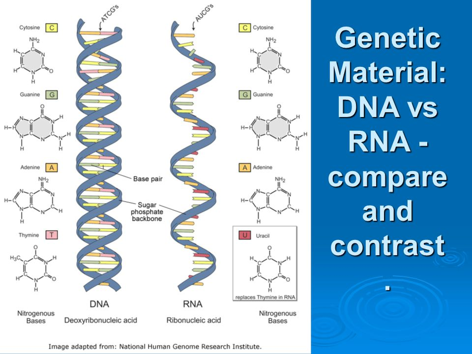 Genetic Material: DNA vs RNA - compare and contrast.