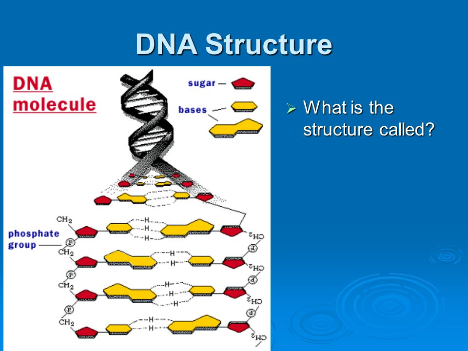 DNA Structure What is the structure called