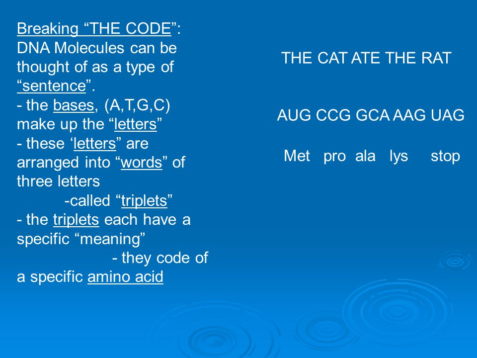 Breaking THE CODE : DNA Molecules can be thought of as a type of. sentence . - the bases, (A,T,G,C) make up the letters