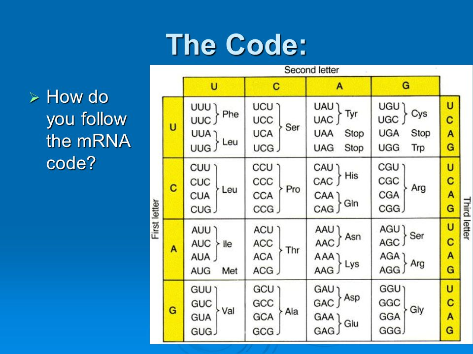 The Code: How do you follow the mRNA code