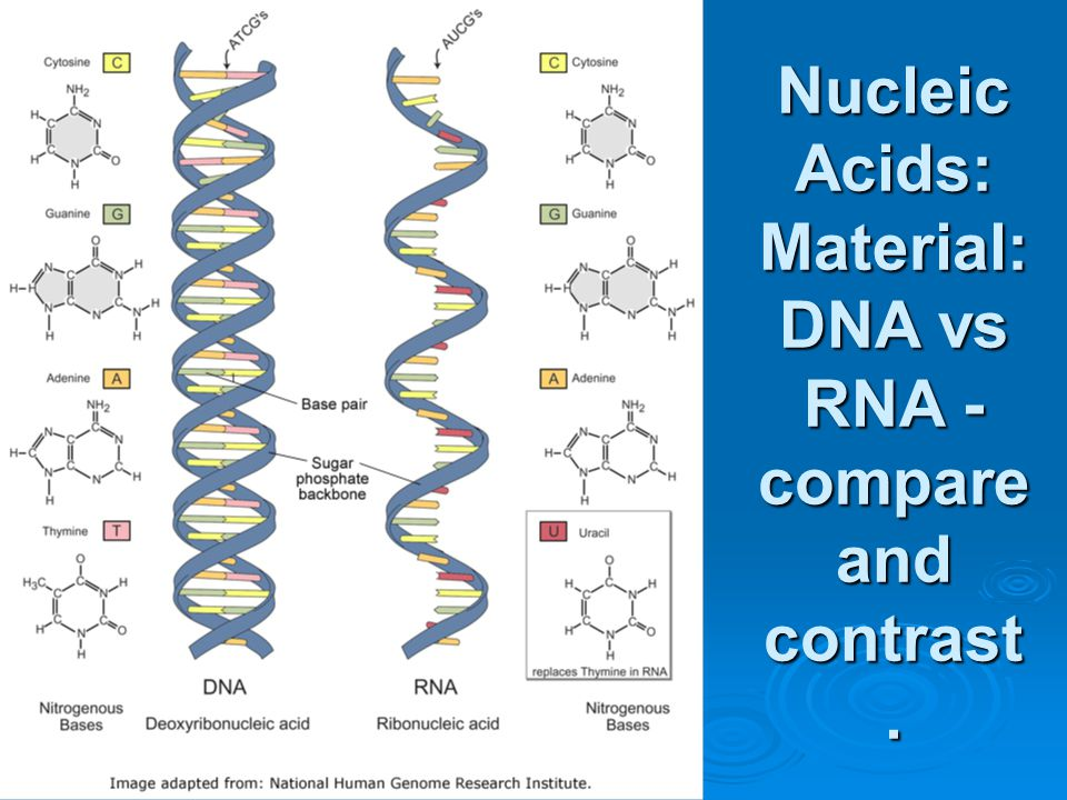 NucleicAcids: Material: DNA vs RNA - compare and contrast.