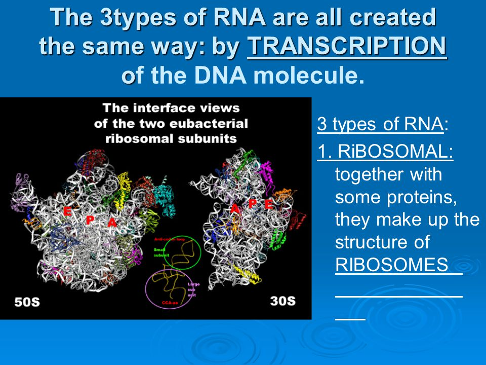The 3types of RNA are all created the same way: by TRANSCRIPTION of the DNA molecule.