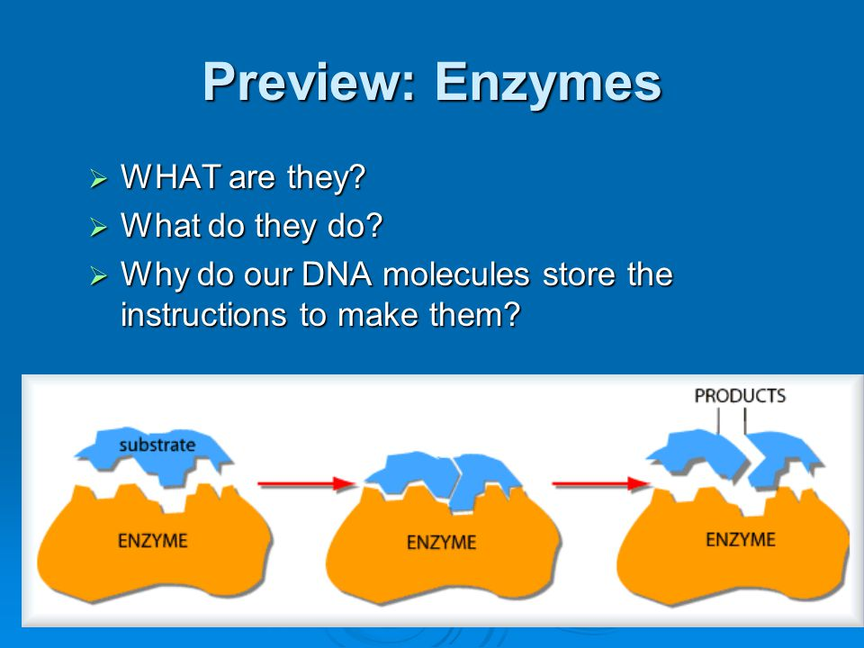 Preview: Enzymes WHAT are they What do they do