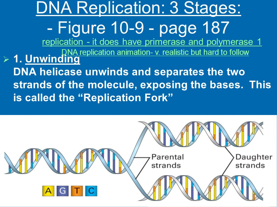 DNA Replication: 3 Stages: - Figure 10-9 - page 187