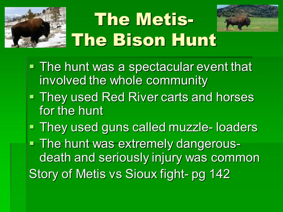 The Metis- The Bison Hunt