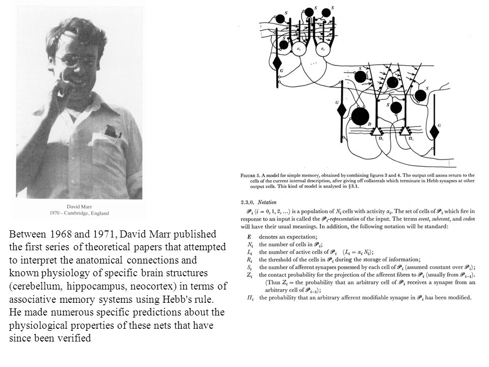 Between 1968 and 1971, David Marr published the first series of theoretical papers that attempted to interpret the anatomical connections and known physiology of specific brain structures (cerebellum, hippocampus, neocortex) in terms of associative memory systems using Hebb s rule.