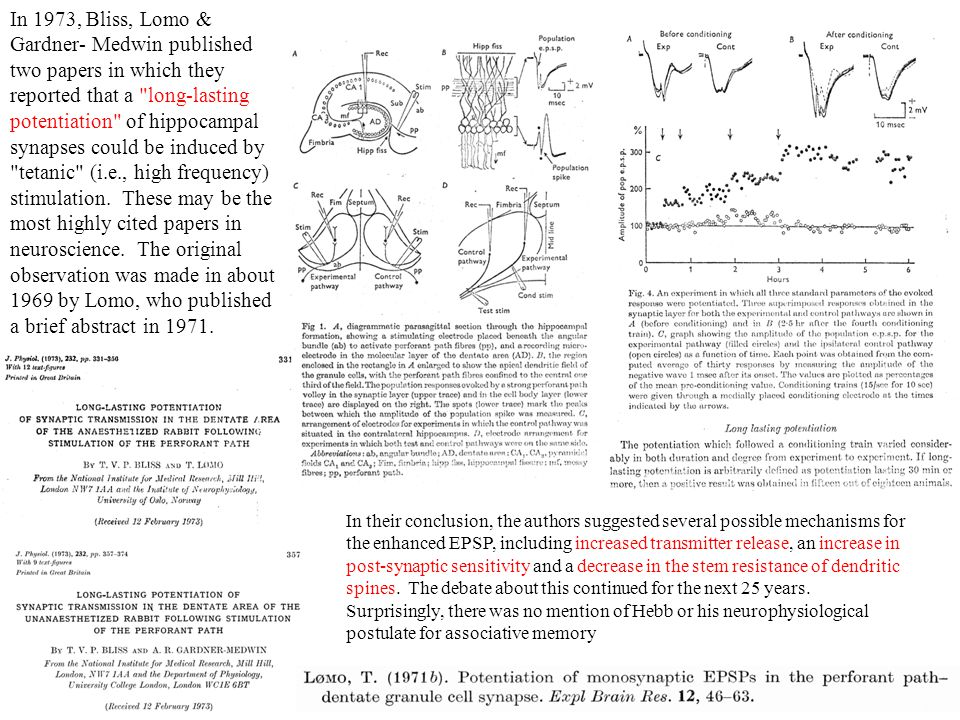 In 1973, Bliss, Lomo & Gardner- Medwin published two papers in which they reported that a long-lasting potentiation of hippocampal synapses could be induced by tetanic (i.e., high frequency) stimulation. These may be the most highly cited papers in neuroscience. The original observation was made in about 1969 by Lomo, who published a brief abstract in 1971.