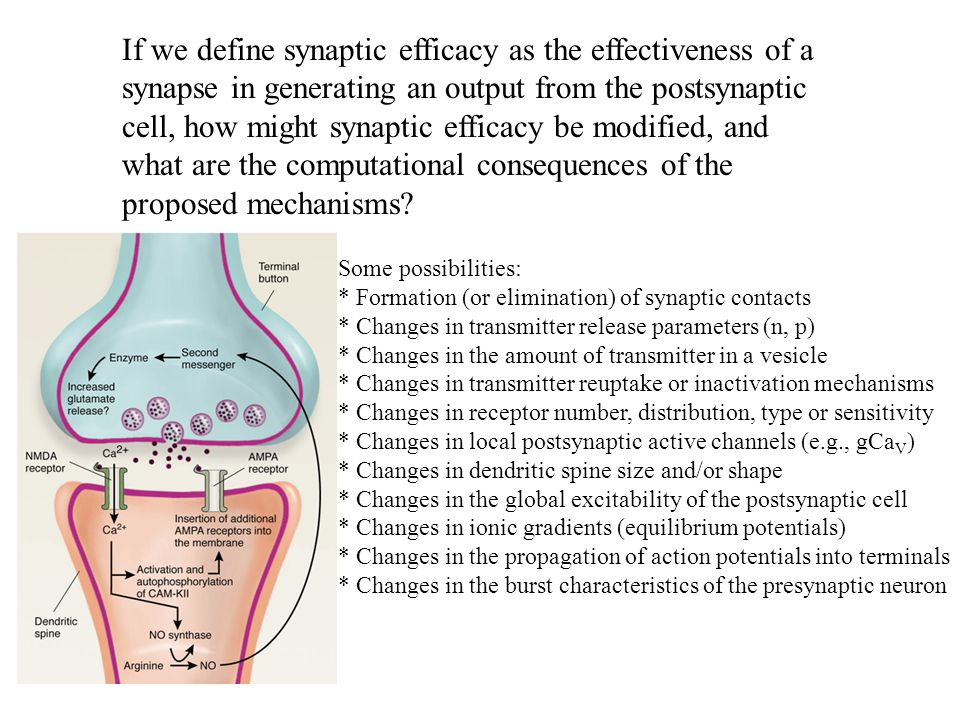 If we define synaptic efficacy as the effectiveness of a synapse in generating an output from the postsynaptic cell, how might synaptic efficacy be modified, and what are the computational consequences of the proposed mechanisms