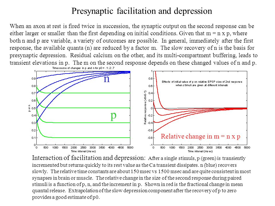 n p Presynaptic facilitation and depression